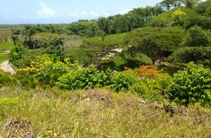 Lot in La Barbacoa, Dominican Republic
