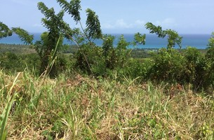 Lot in Cosón, Dominican Republic