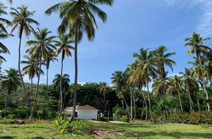 Lot in Cosón, Dominican Republic